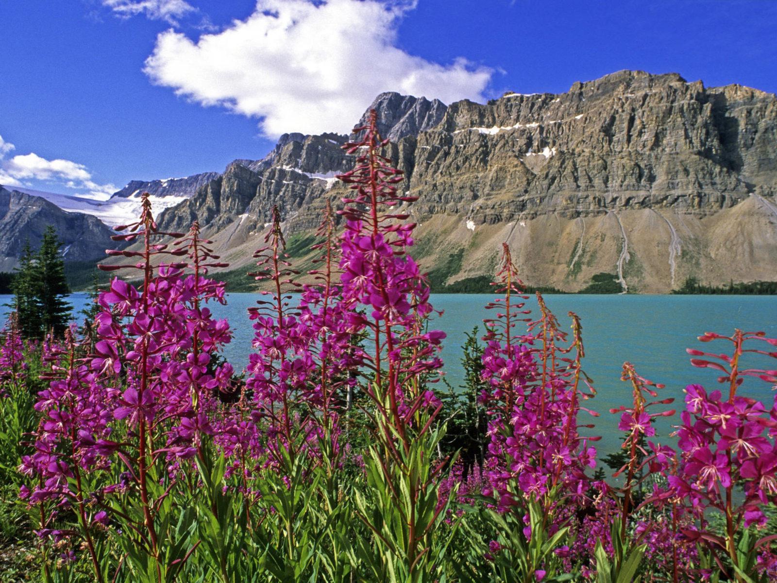 Fall Wallpapes Banff National Park Alberta Canada Bow Lake Fireweed