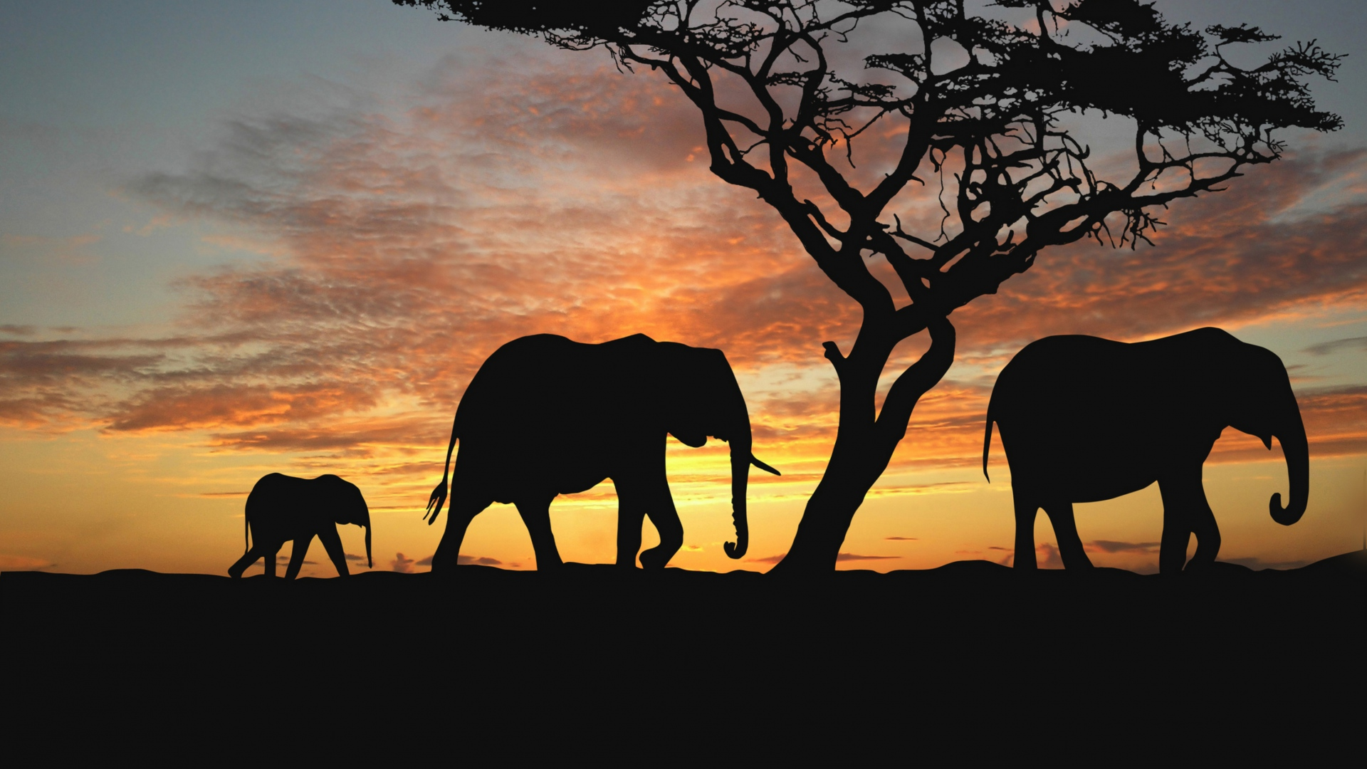 Sunflower Hd Wallpaper 1080p Download Wallpaper 1920x1080 Elephants Cub Silhouette