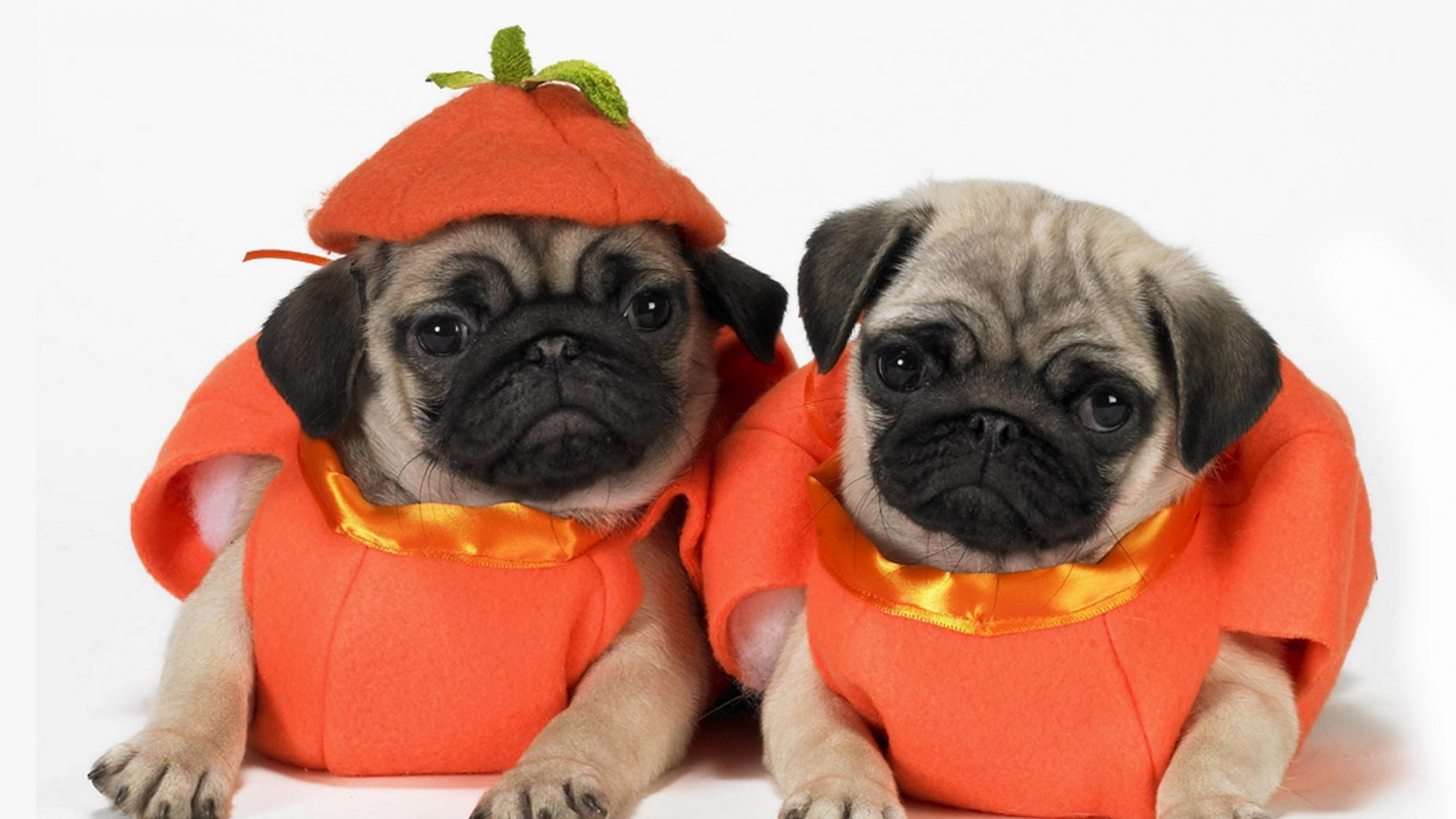 Cute Wallpapers 1080p Beagles Download Wallpaper 1920x1080 Pugs Dogs Puppies Costumes