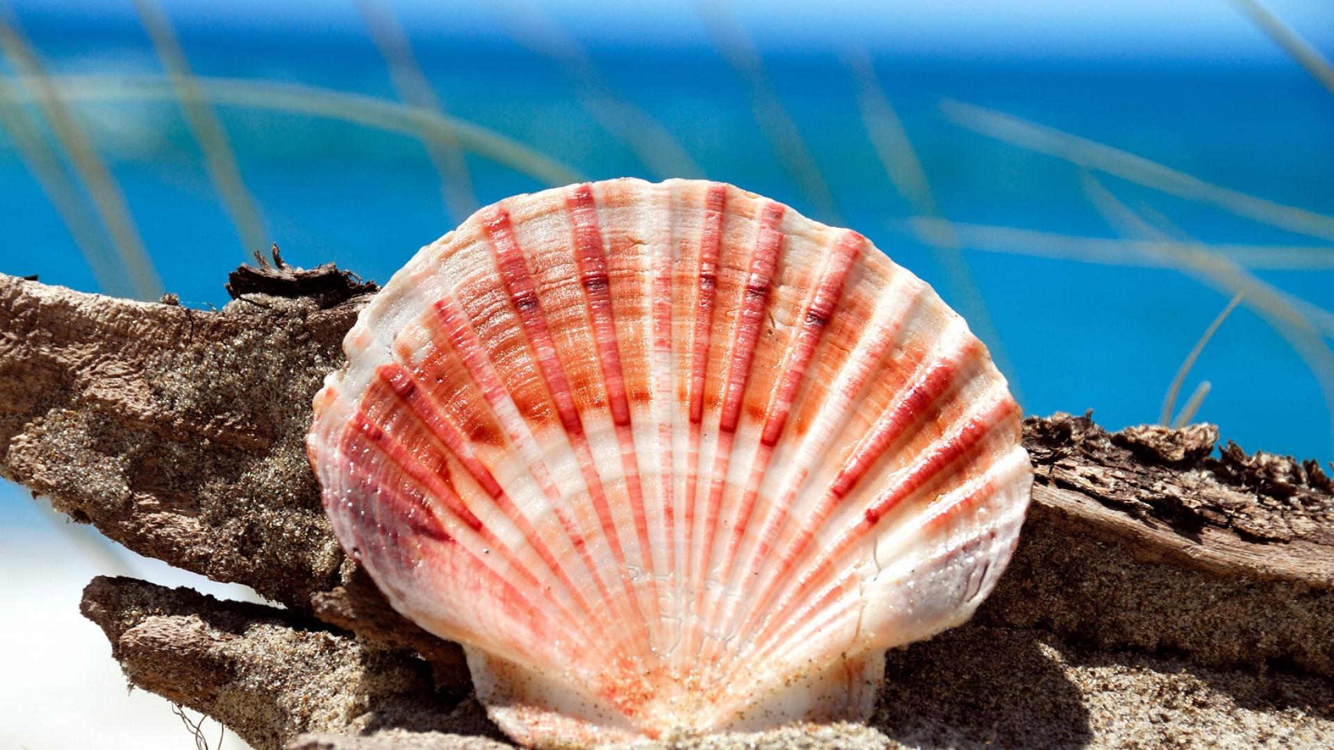 When A Snail Falls In Love Wallpaper Download Wallpaper 1920x1080 Shell Sea Stones Form Full