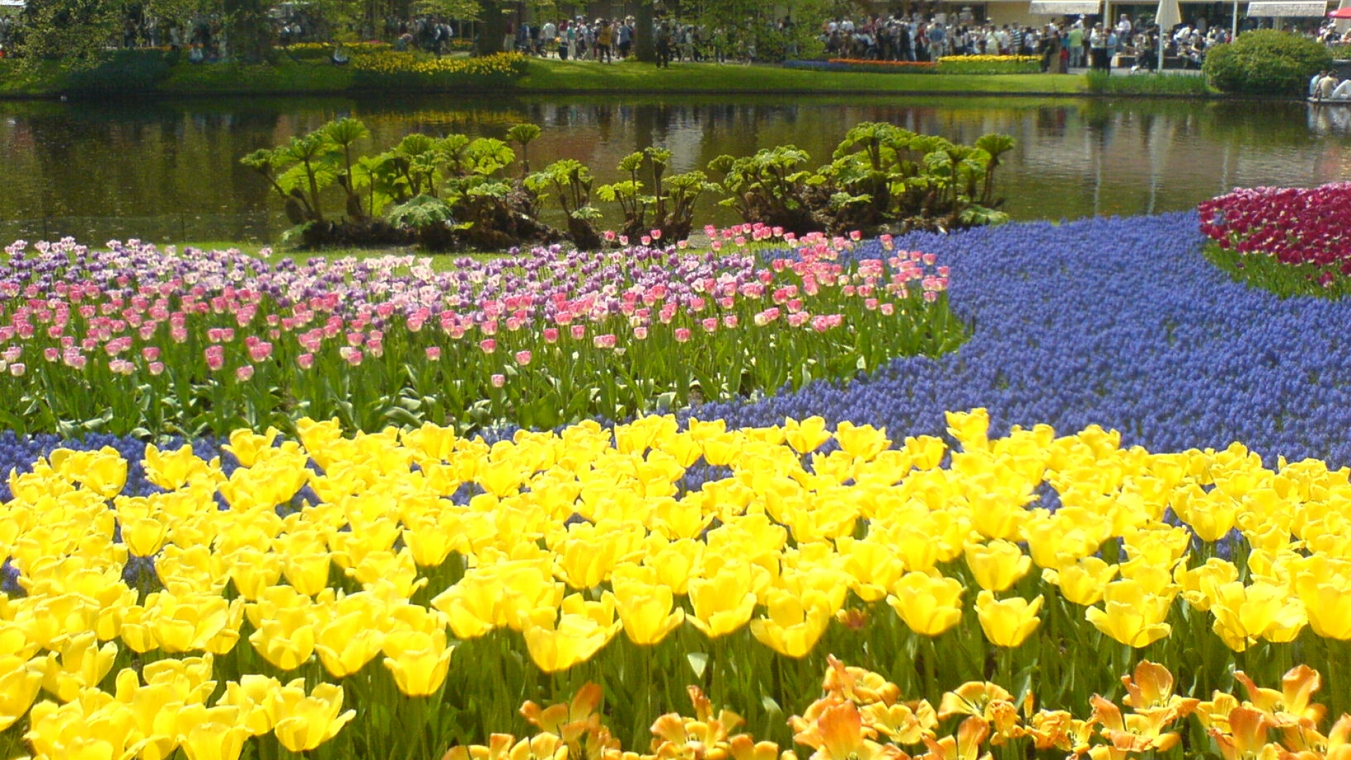 Download Wallpaper X Tulips Flowers Pond Trees
