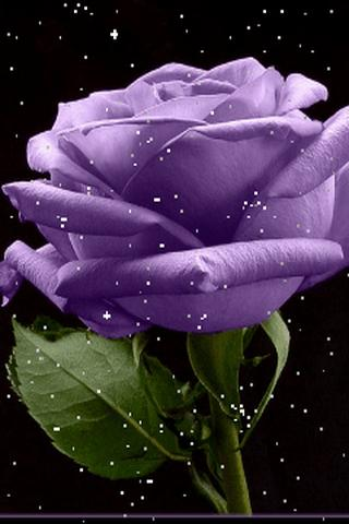 Live 3d Hd Wallpapers For Laptop Download Live Flower Wallpaper Gallery