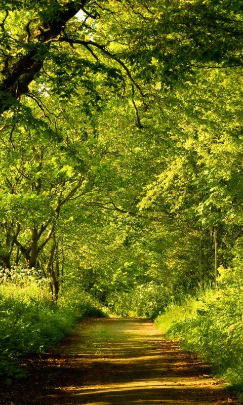 Good Morning Cute Wallpaper Hd Download 3d Forest Live Wallpaper Gallery