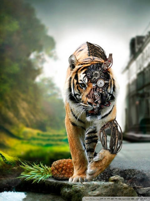 Cute Animal Wallpapers For Desktop Background Full Screen Download Amazing Hd Wallpapers For Mobile Gallery