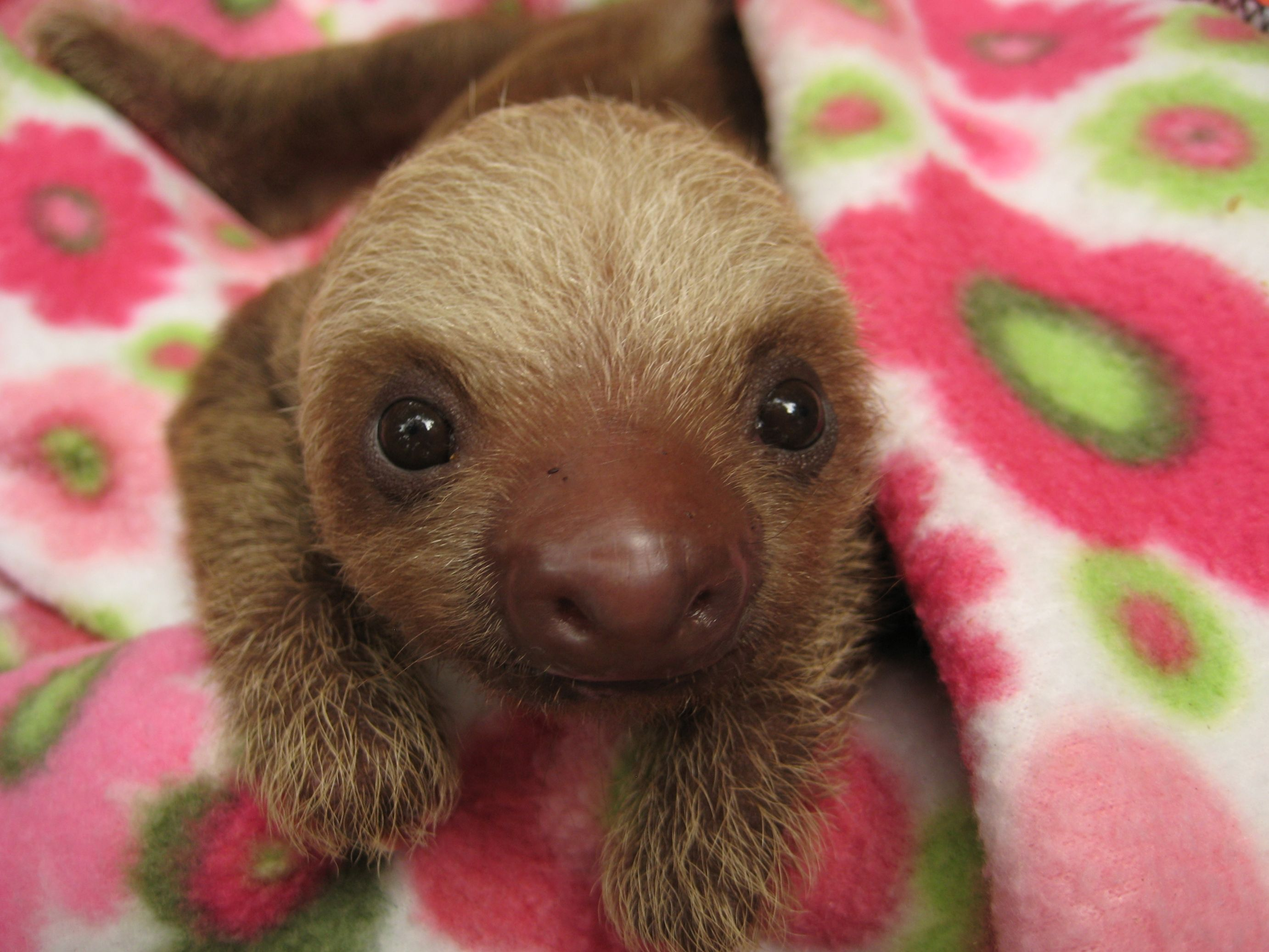 Life Success Quotes Hd Wallpapers Download Baby Sloth Wallpaper Gallery