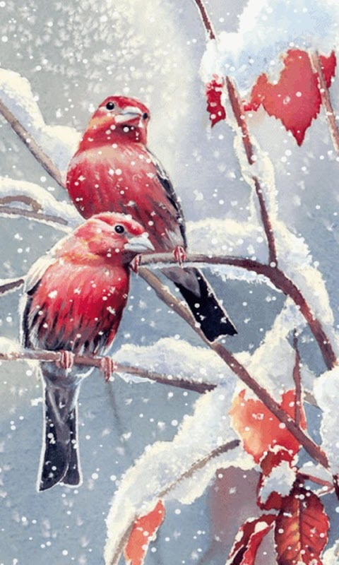 Snow Falling Wallpaper Hd Download Birds Live Wallpaper For Android Gallery