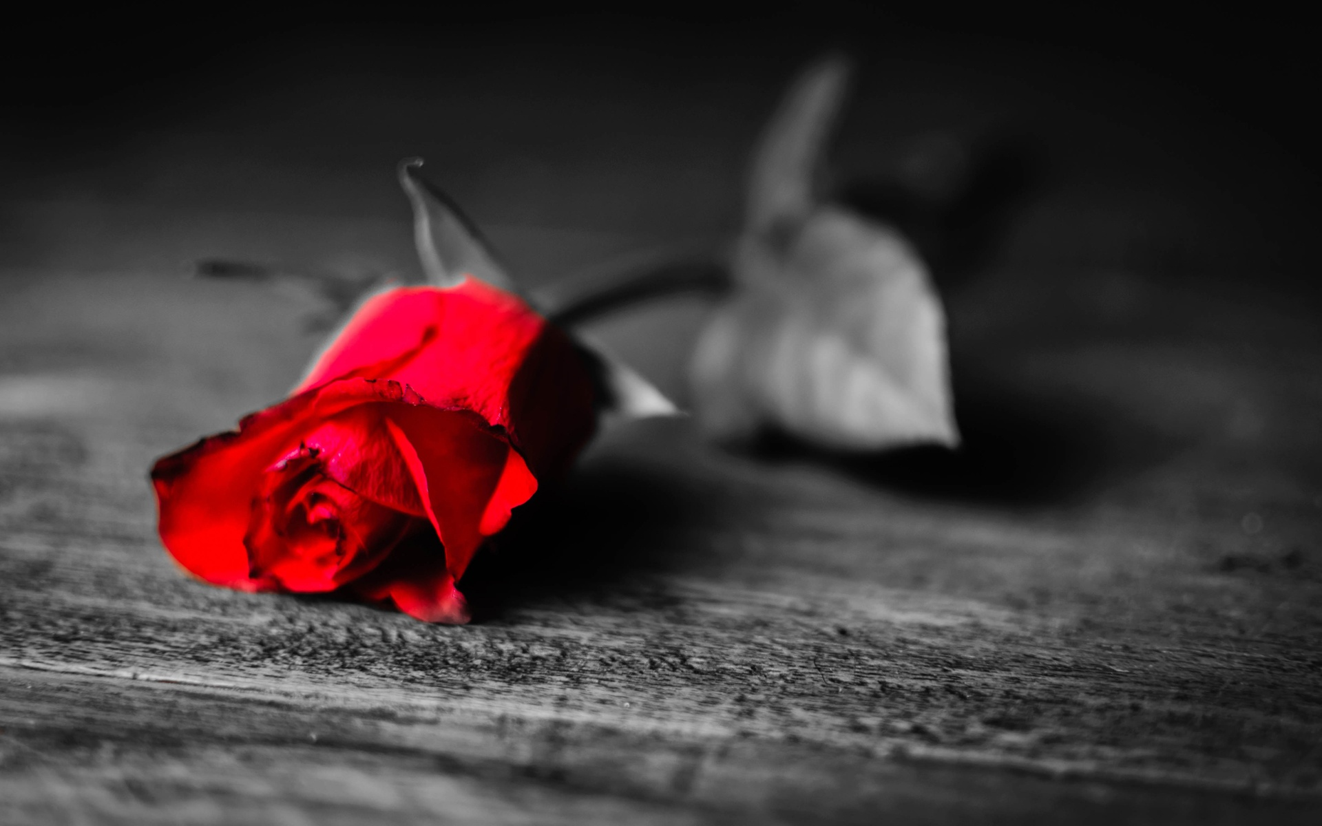 Awesome Phone Wallpapers Quotes Download Black And Red Rose Wallpaper Gallery