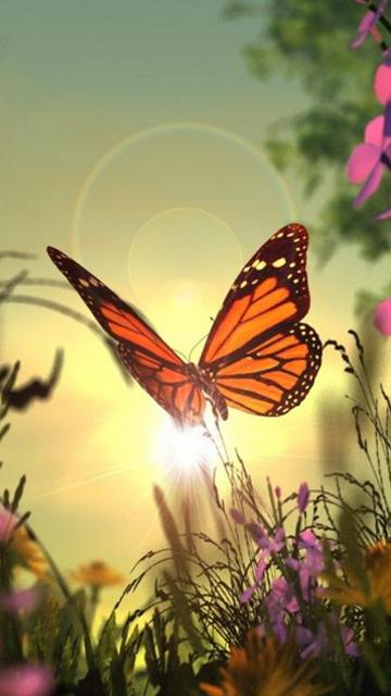 Butterfly 3d Live Wallpaper Free Download Download Butterfly Cell Phone Wallpaper Gallery