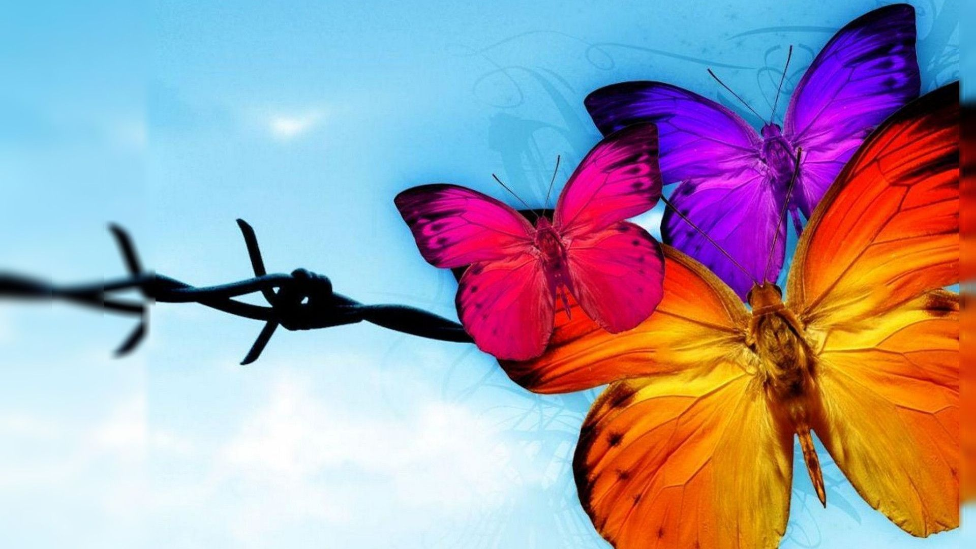 Cute Wallpapers For Lg Phones Download Butterfly Wallpaper Free Download Gallery