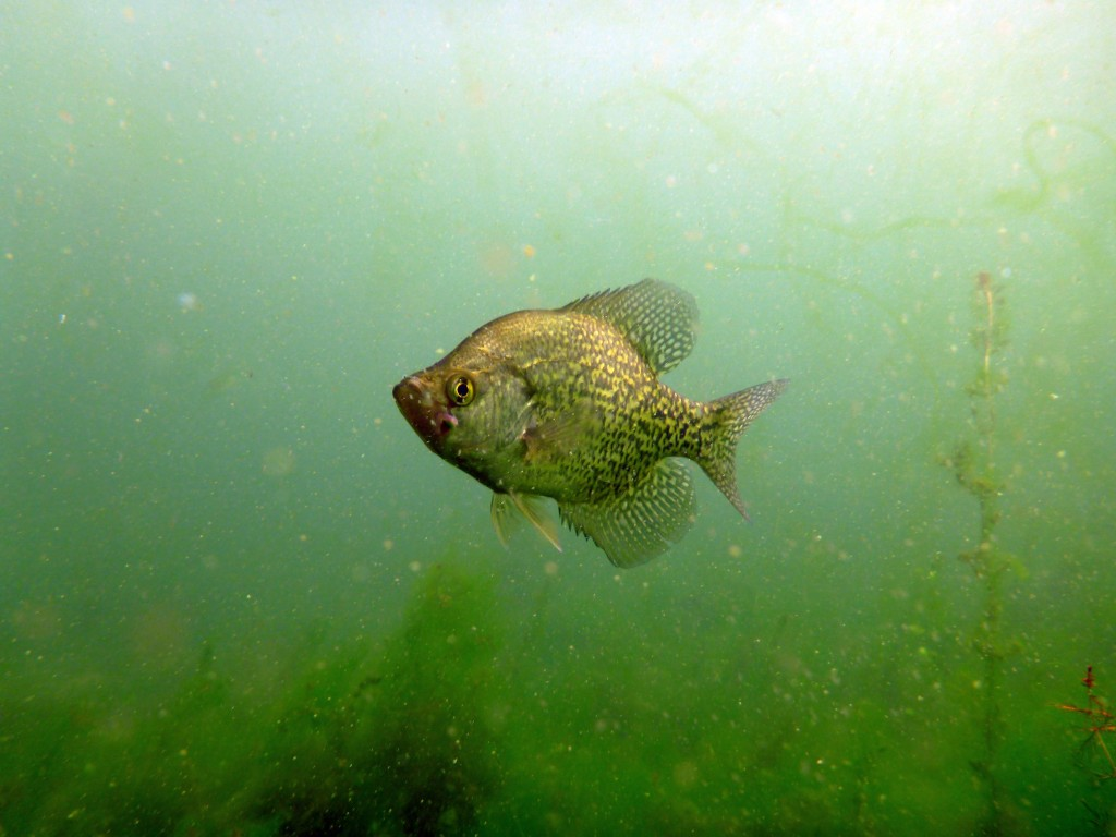 3d Live Wallpaper Iphone X Download Crappie Fishing Wallpaper Gallery