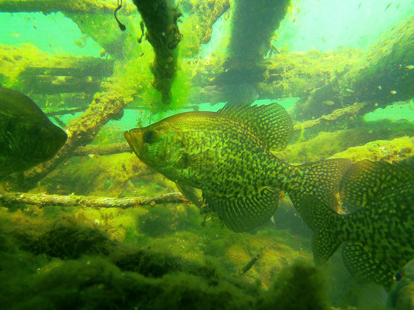 Live Wallpapers For Nook Hd Download Crappie Fishing Wallpaper Gallery