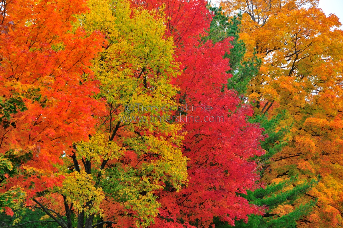 Falling Leaves Live Wallpaper For Android Download Fall Colors Wallpapers Gallery