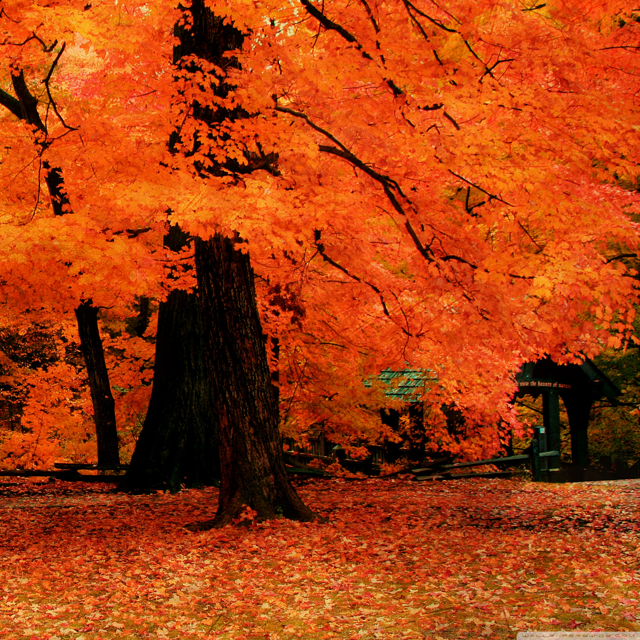 Fall Leaves Live Wallpaper Iphone Download Fall Ipad Wallpaper Gallery