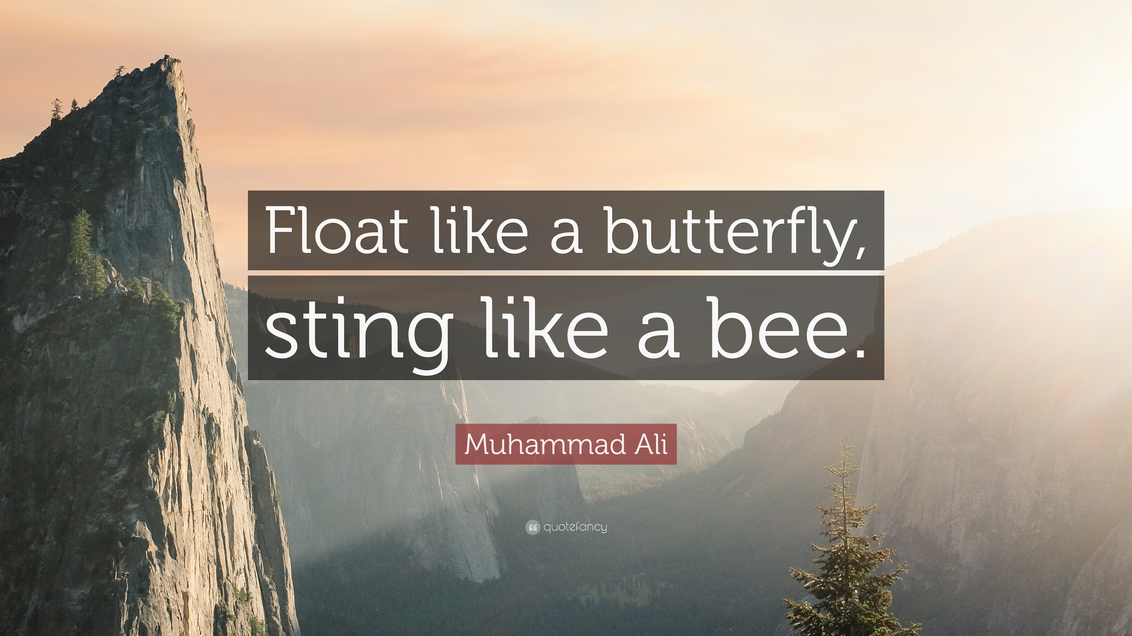 Hd Bible Quotes Wallpapers Download Float Like A Butterfly Sting Like A Bee Wallpaper