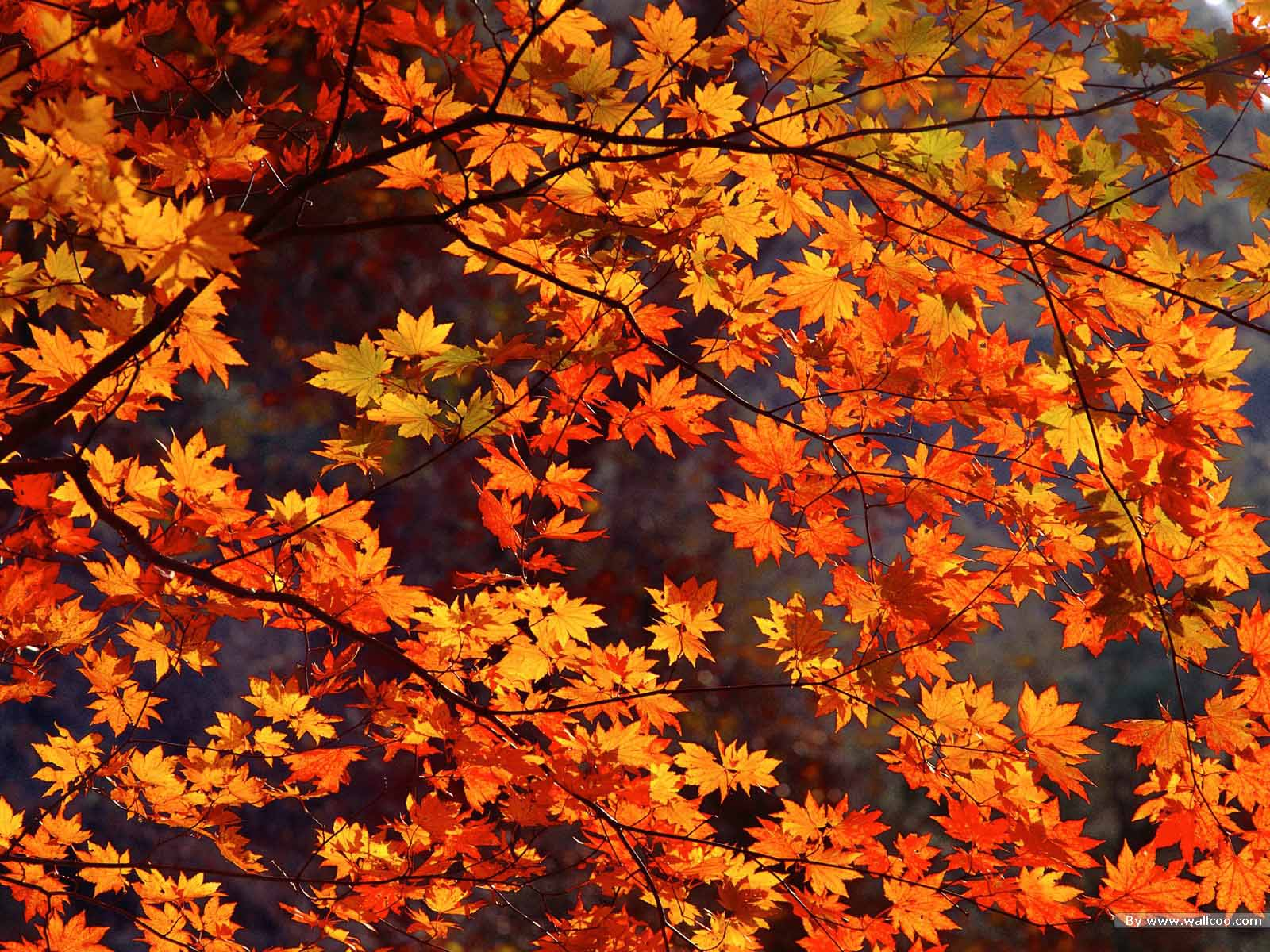 Cute Psychedelic Phone Wallpaper Download Free Autumn Wallpaper Gallery