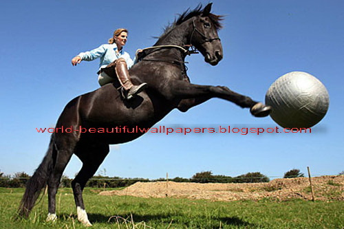 Free Fall Wallpaper For Phone Download Funny Horse Wallpapers Gallery