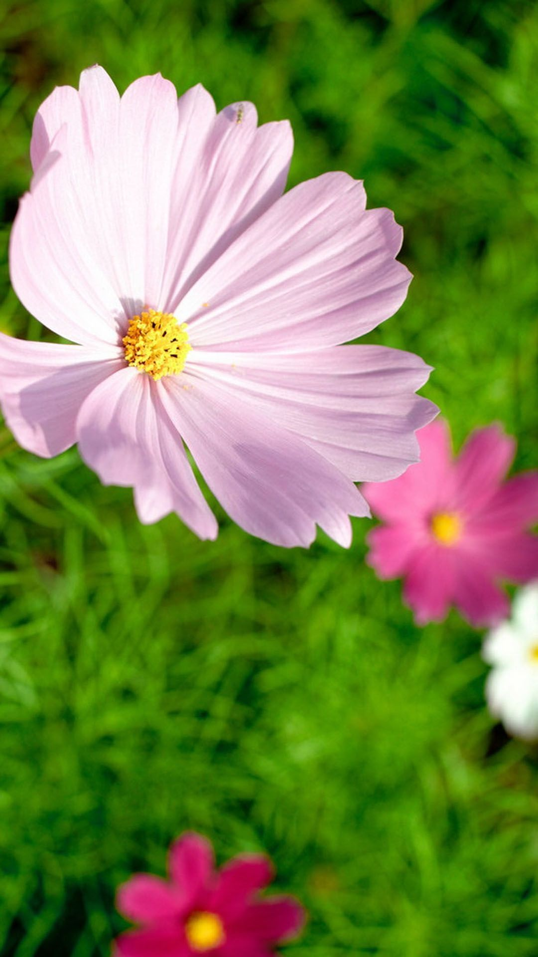 Android Phone Wallpaper 3d Download Mobile Wallpapers Flowers Gallery