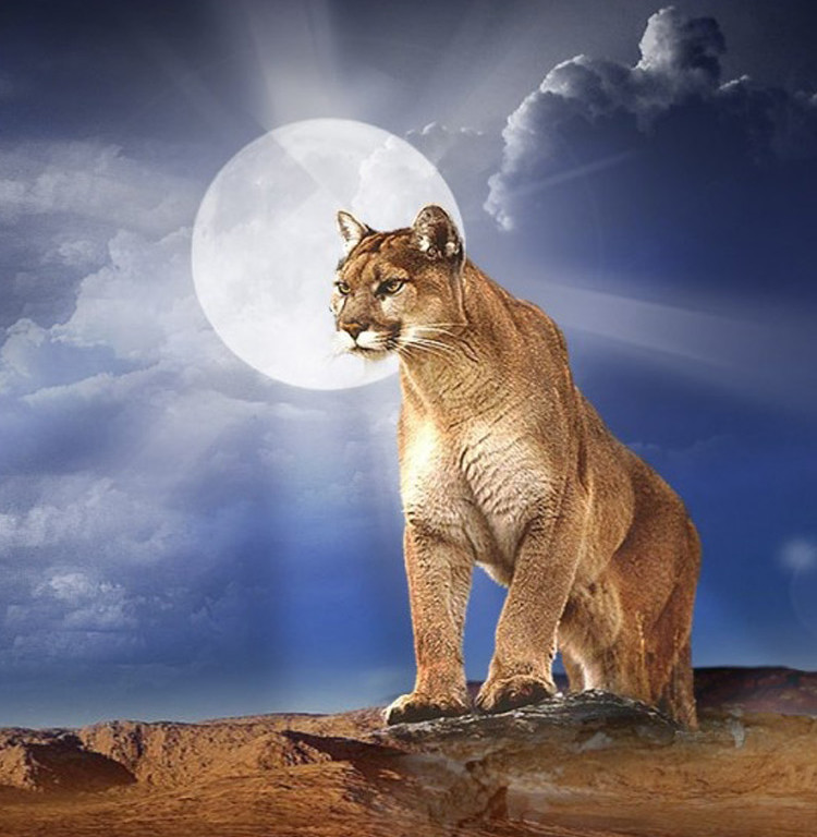 Lion Quotes Wallpaper Download Mountain Lion Hd Wallpaper Gallery