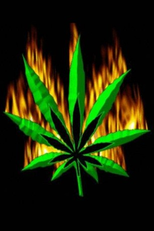 Live Moving Wallpaper For Iphone Download Moving Weed Wallpaper Gallery