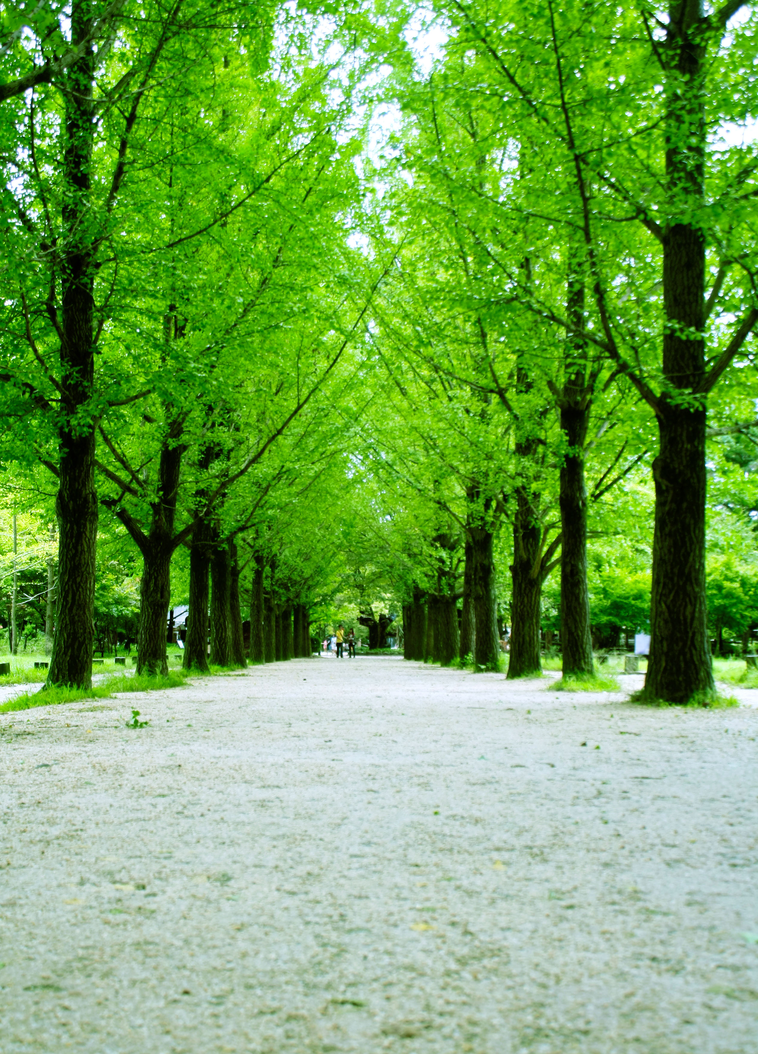 Birthday Quotes Wallpaper Download Download Nami Island Wallpaper Gallery