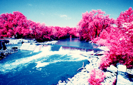 3d Tree Live Wallpaper Download Pink Forest Wallpaper Gallery