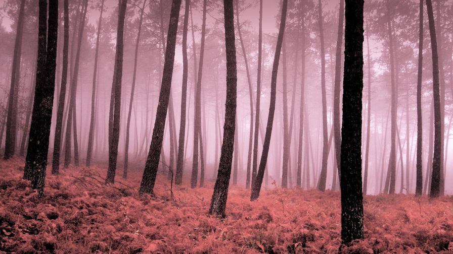 Animated Nature Wallpapers Free Download Download Pink Forest Wallpaper Gallery