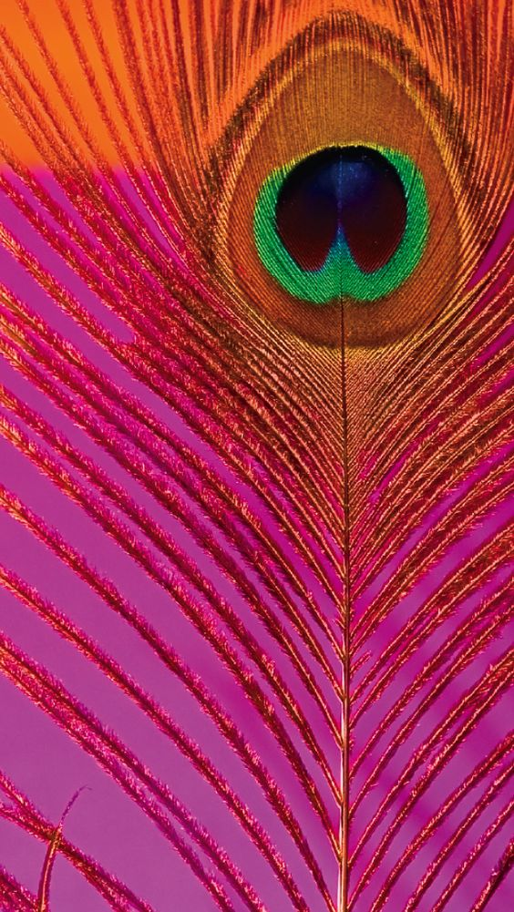 Dynamic Iphone 5s Wallpapers Download Pink Peacock Wallpaper Gallery