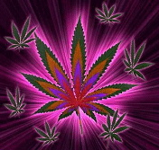 Lord Shiva 3d Wallpapers For Mobile Download Pink Weed Wallpaper Gallery