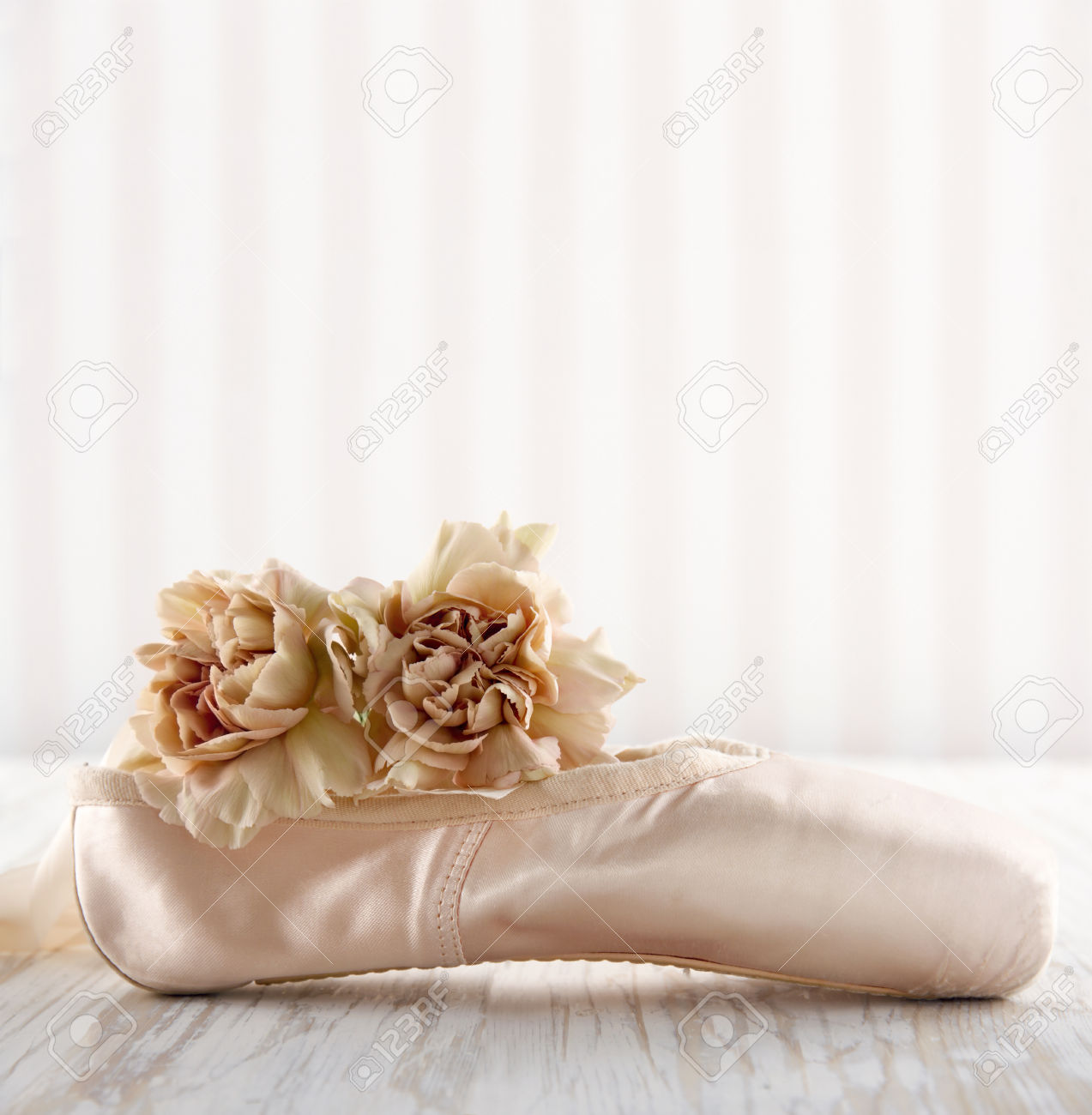 Cute Dog Full Hd Wallpaper Download Pointe Shoes Wallpaper Gallery