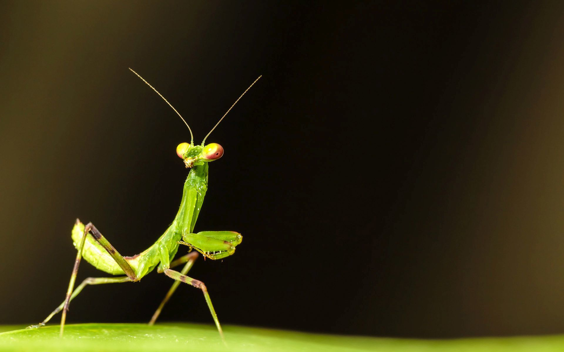 Broken Heart Quotes Wallpapers For Mobile Download Praying Mantis Wallpaper Gallery