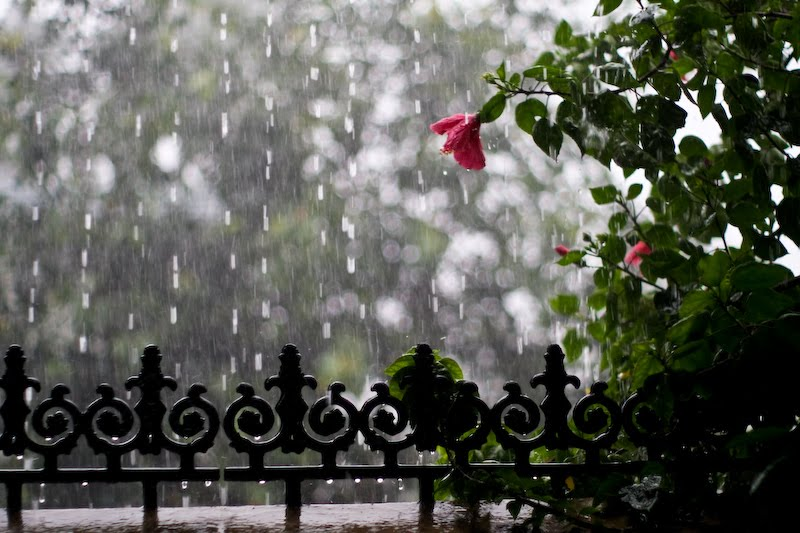 Good Morning Cute Baby Hd Wallpaper Download Rainy Season Wallpaper Download Gallery