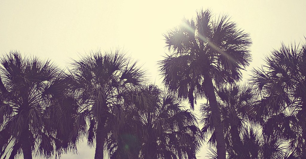 Download Bible Quotes Wallpaper Download Retro Palm Tree Wallpaper Gallery