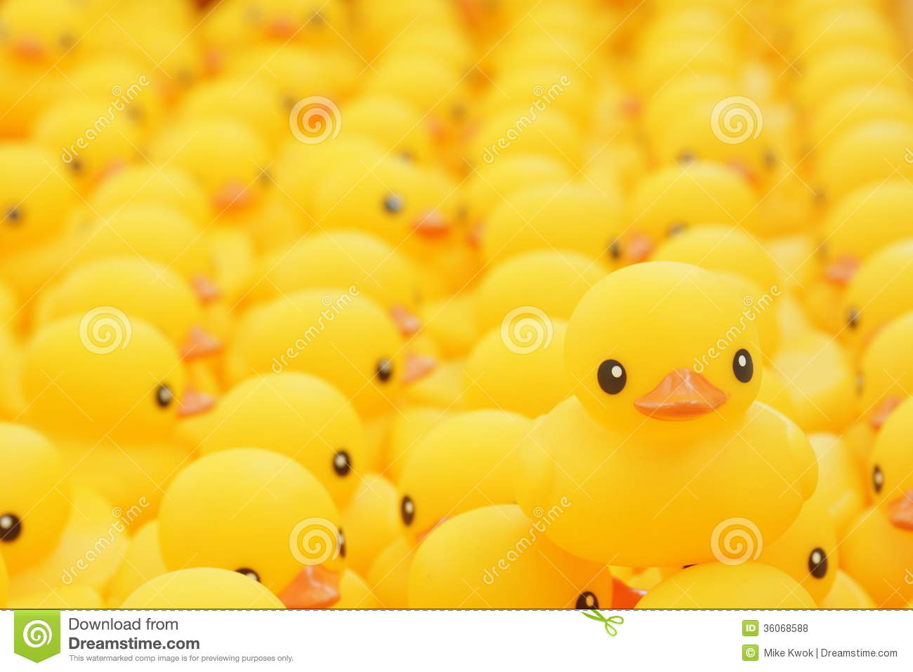 Funny Animal Wallpapers With Quotes Download Rubber Ducky Wallpapers Gallery