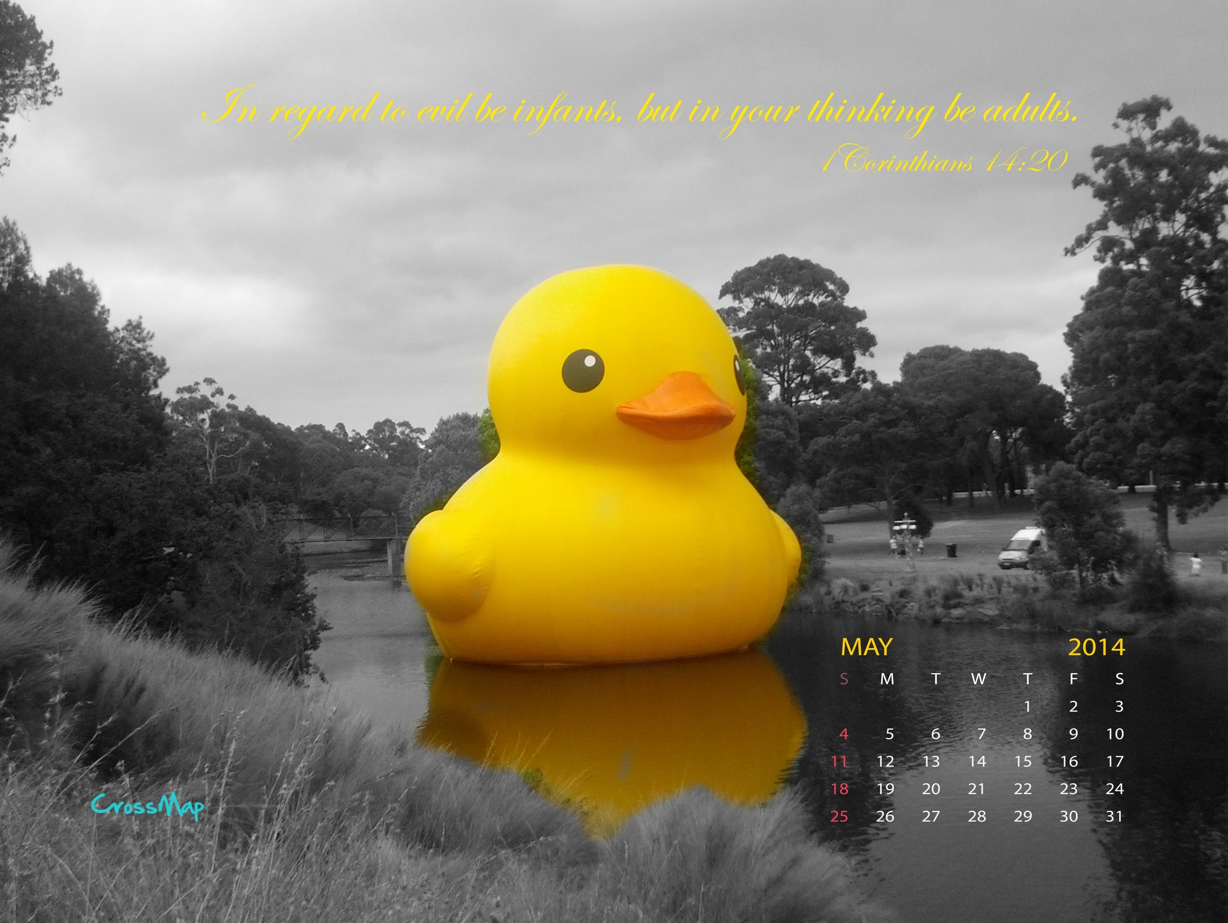Wallpaper Wiz Khalifa Quotes Download Rubber Ducky Wallpapers Gallery
