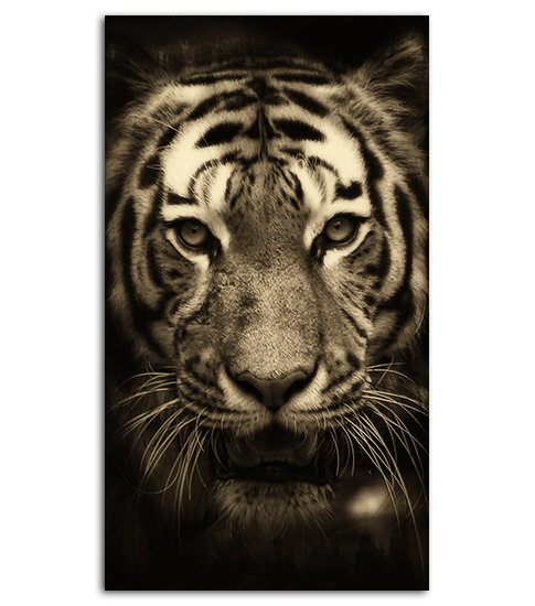 Tiger Iphone 6 Wallpaper Download Tiger Hd Wallpaper For Mobile Gallery