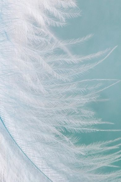 Pastel Wallpaper Quotes Download White Feather Wallpaper Gallery