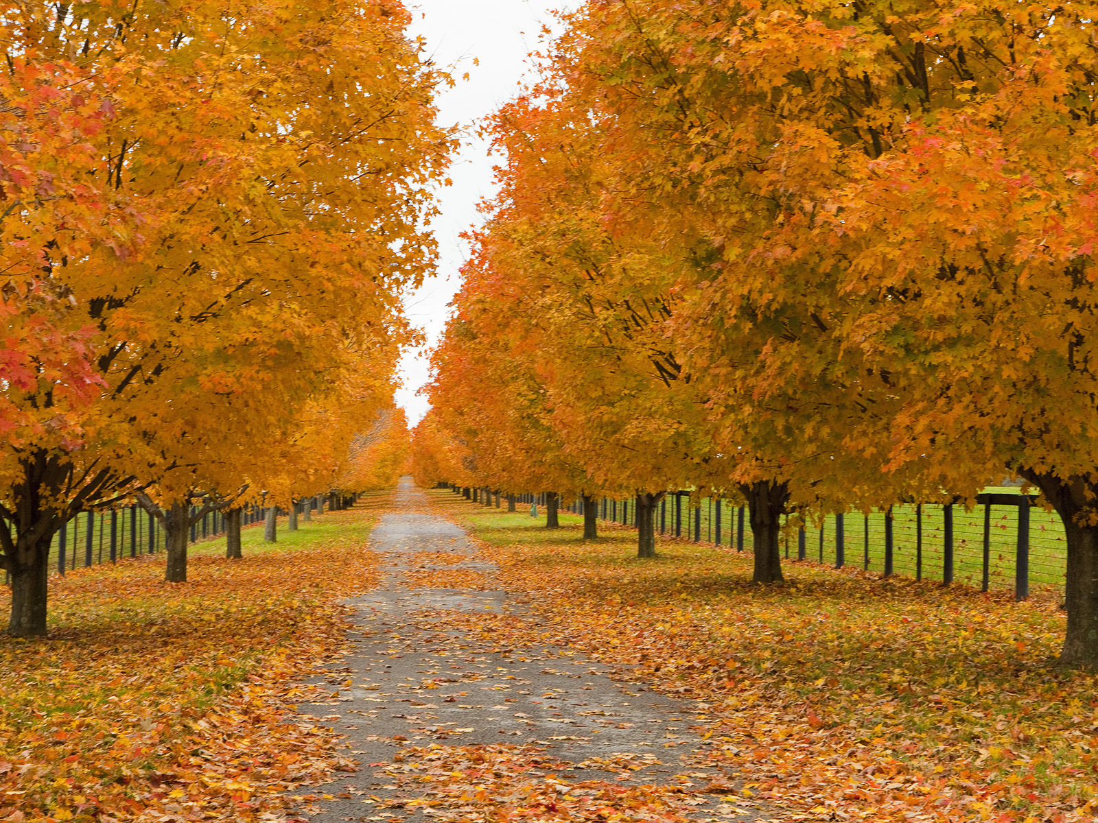 Fall Leaves Fox Wallpaper Download Windows Xp Fall Wallpaper Gallery