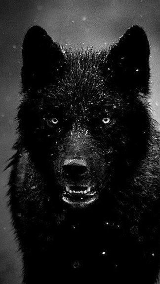 Lone Wolf Wallpaper Quote Download Wolf Iphone Wallpaper Gallery