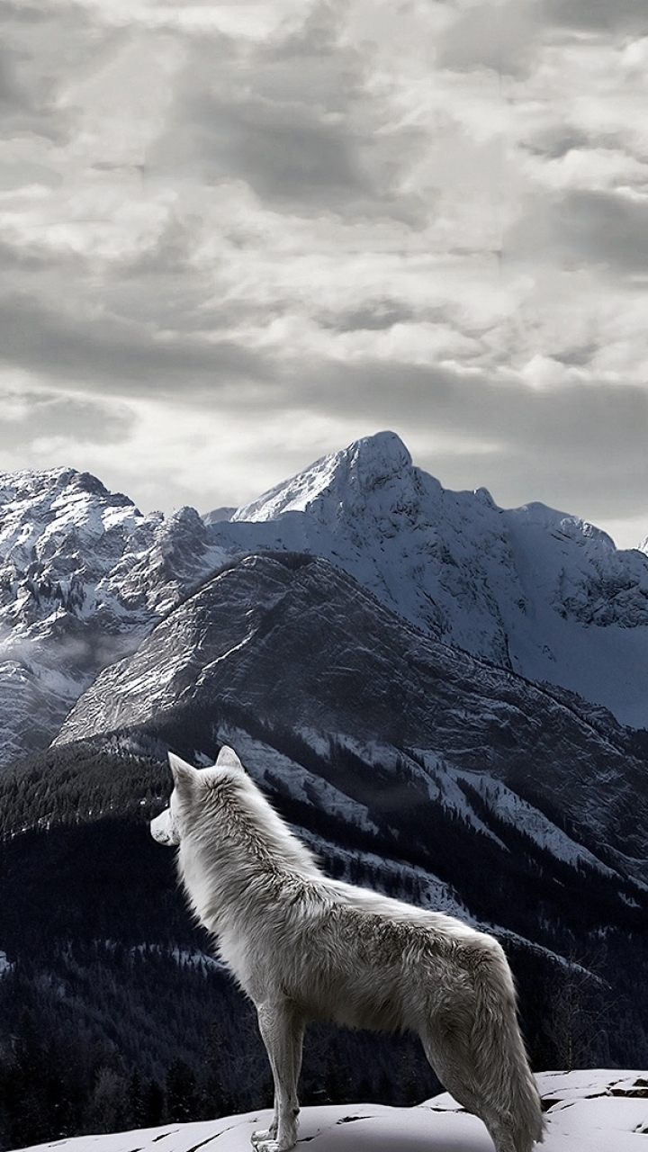 True Wallpaper With Quotes Download Wolf Wallpaper Iphone Gallery
