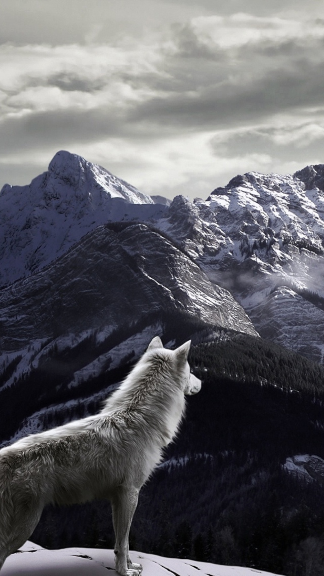Download Free Live Wallpapers 3d Download Wolf Wallpaper Iphone Gallery