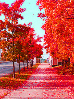 Boston In The Fall Wallpaper Download Zedge Nature Wallpapers Gallery