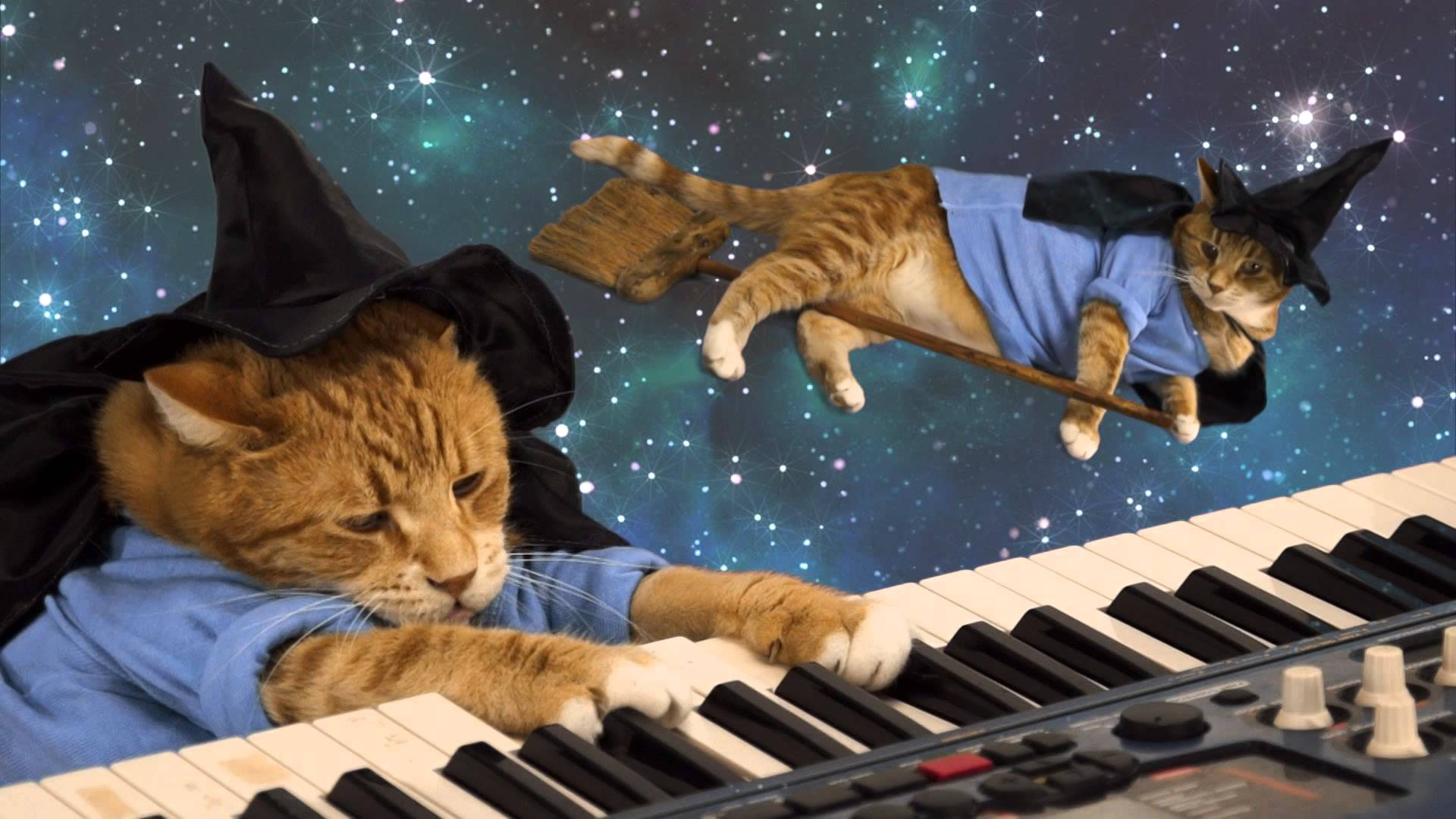 Download Sweet Quotes Wallpapers Download Keyboard Cat Wallpaper Gallery