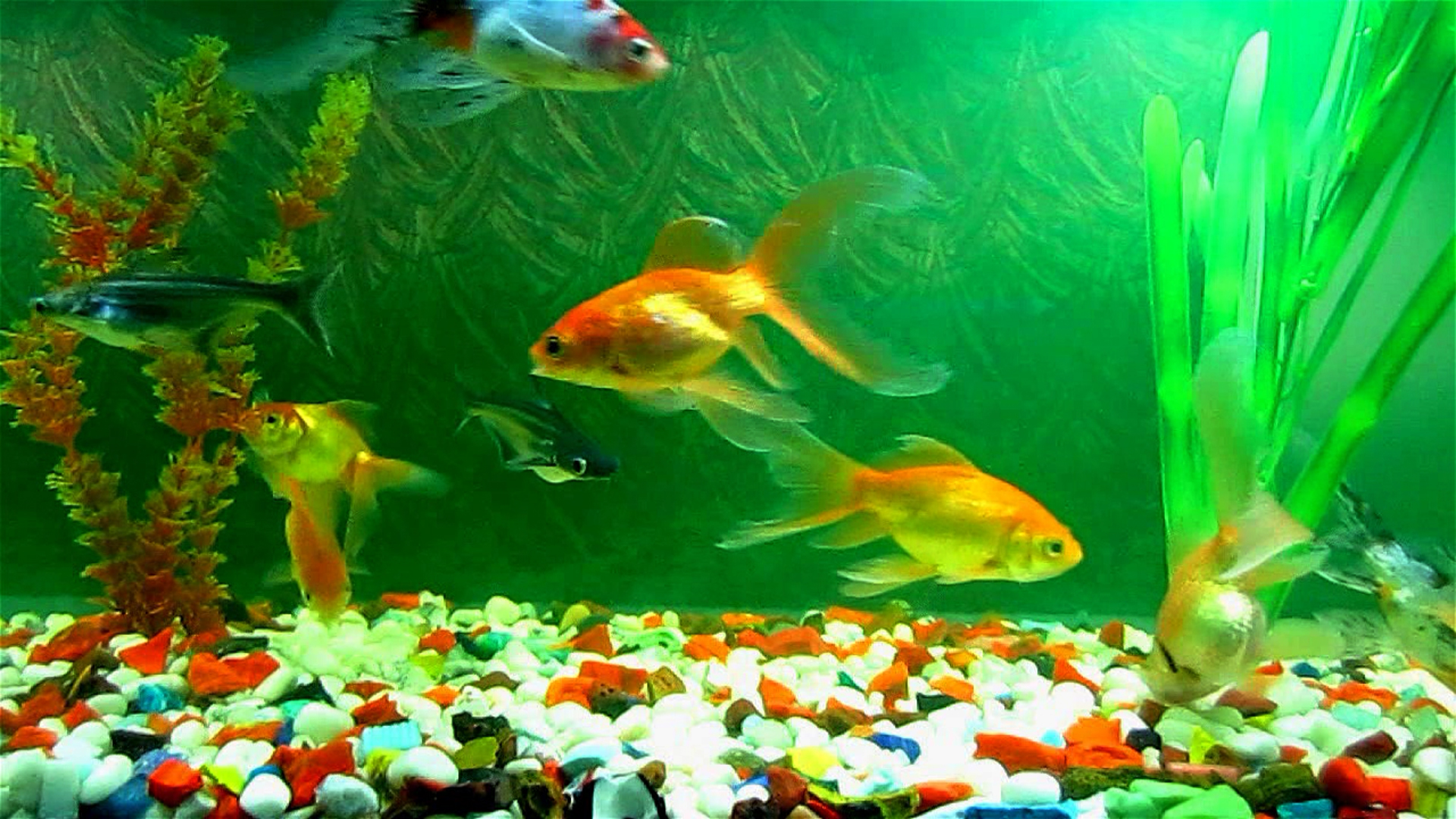 K Anime Wallpaper Download Aquarium Fish Wallpapers Hd Gallery