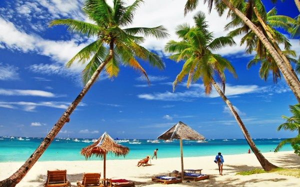 Palm Trees And Beach Umbrellas - Celeb Wallpapers