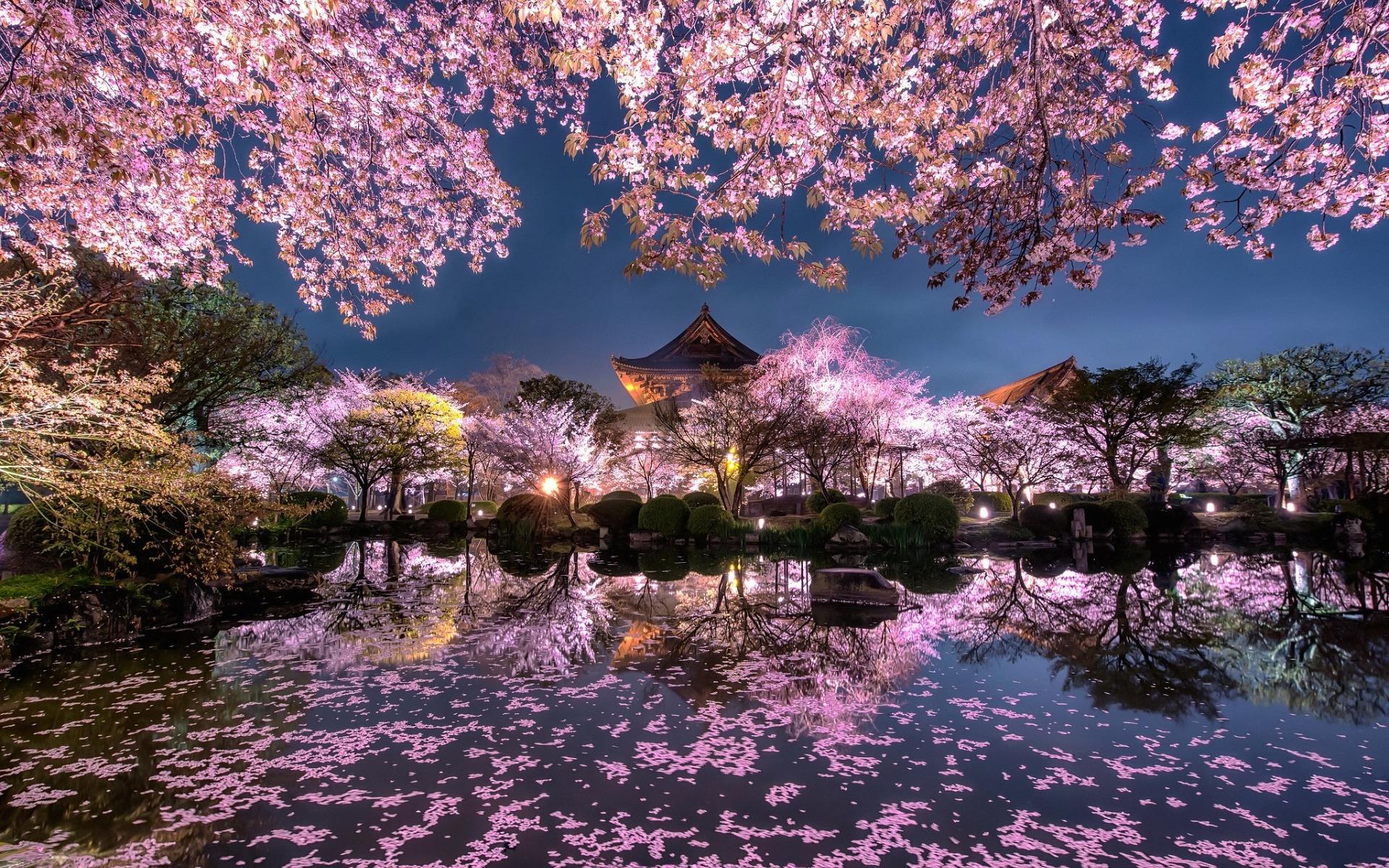 temple japonais de fleur de cerisier
