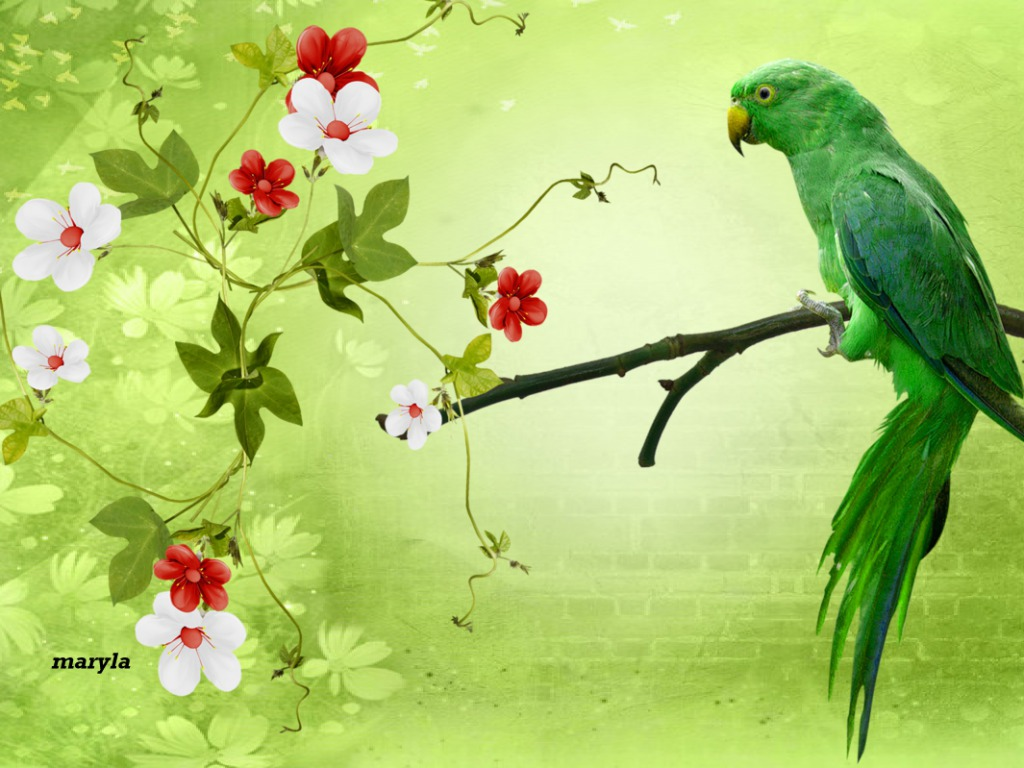 Awesome Parrot Hd Wallpaper Free Download Beautiful Parrot Images Download 1024x768 Download Hd Wallpaper Wallpapertip