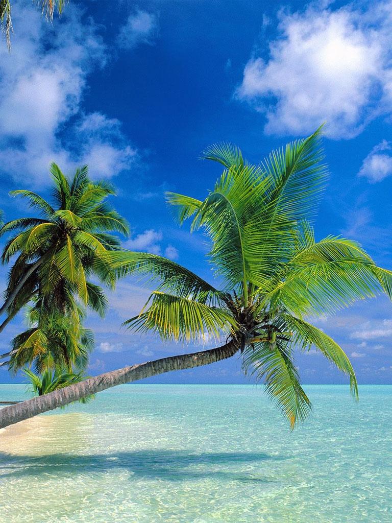fond d ecran telephone palmier plage