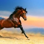 Free Horse Wallpaper Wild Horse Running High Quality 1920x1200 Download Hd Wallpaper Wallpapertip