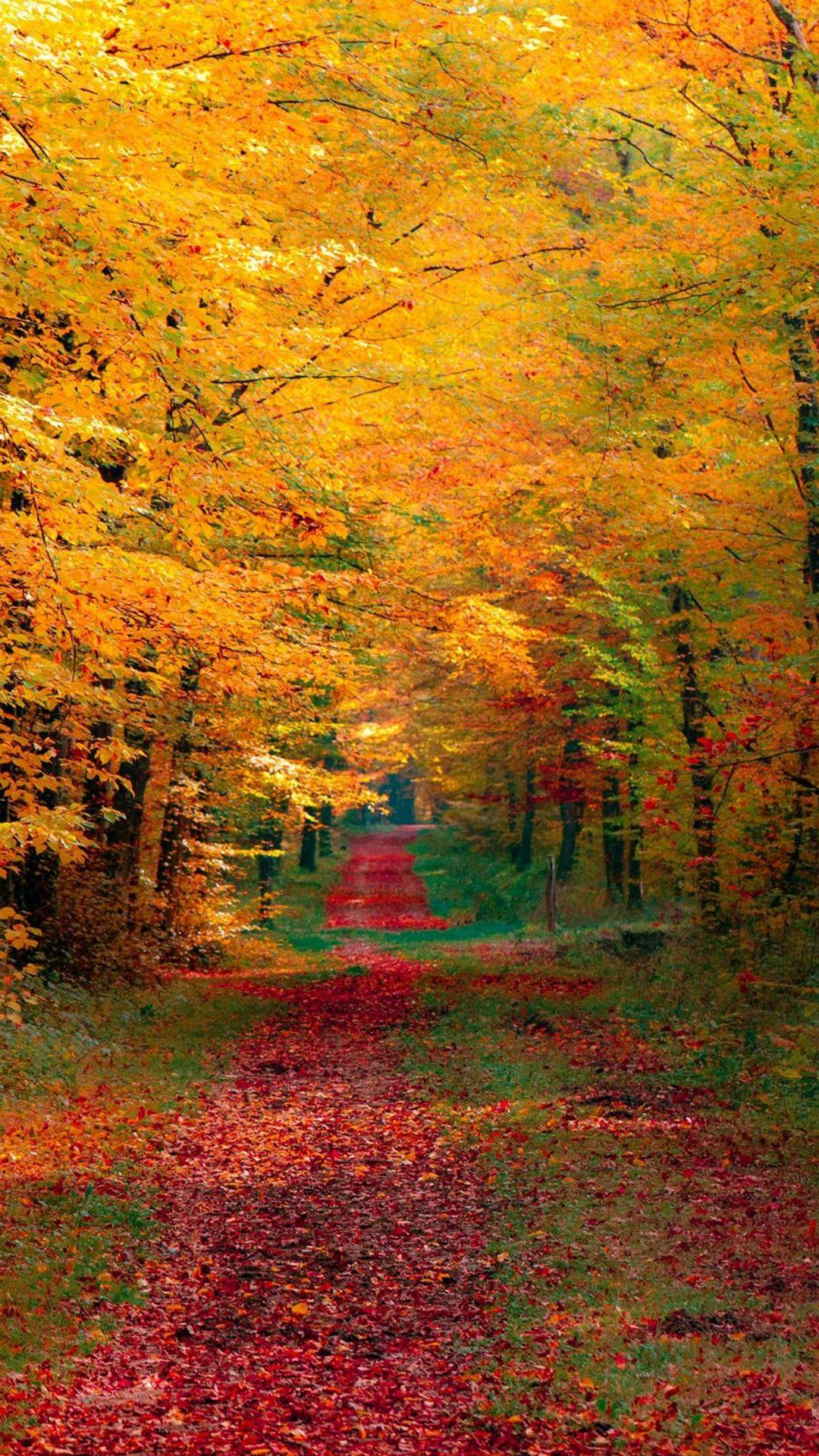 Iphone 6s Wallpaper Fall Autumn Trees Wallpaper 4k Hd Wallpaper Background