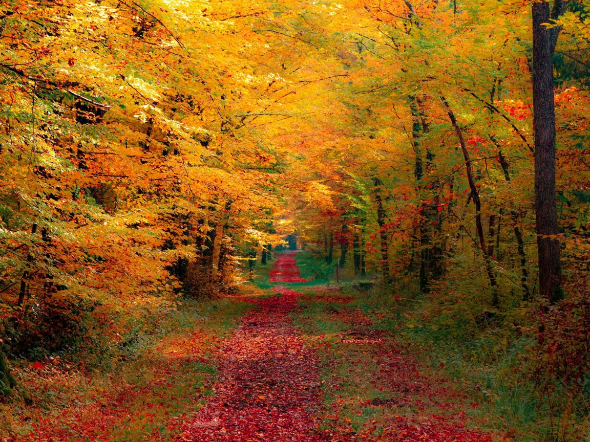 Fall Foliage Wallpaper Screensavers Autumn Trees Wallpaper 4k Hd Wallpaper Background
